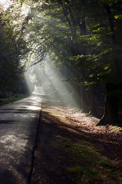 Morning light upon entering national park Hoge Veluwe