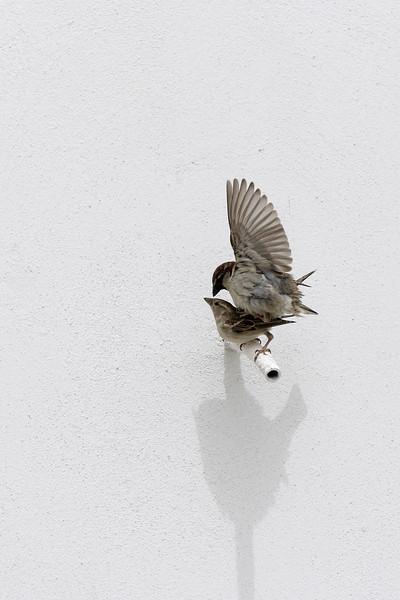 Making birds