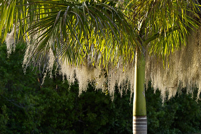 Beautiful light on this palm tree