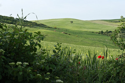 The fields near Montepulciano