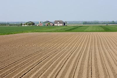The fields near Zuid-Beijerland