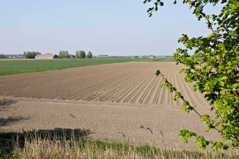 The fields near Zuid-Beijerland