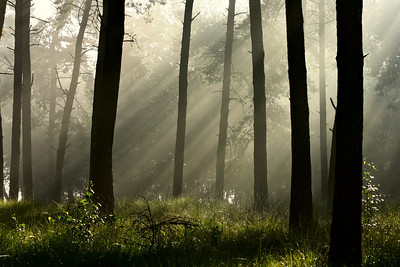 Early light through the fog in the Kampina
