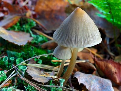 2010-10-24 Oisterwijkse bossen - Kolkven