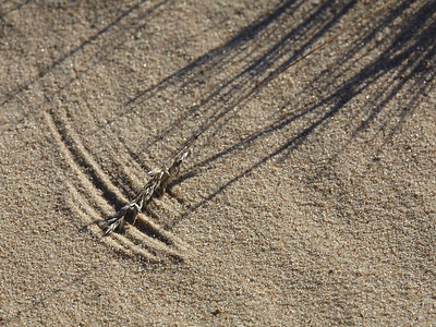 The wind makes shapes in the sand
