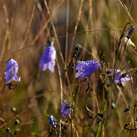 The last flowers of the season
