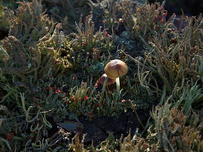 Mushrooms at Kootwijkerzand