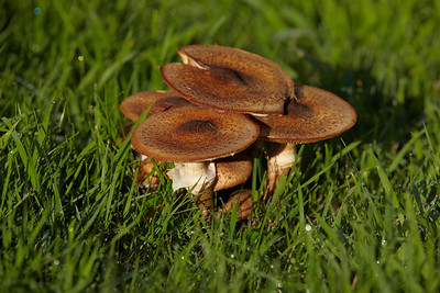 Mushrooms around Radio Kootwijk