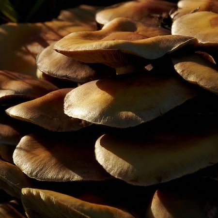 Mushrooms around Radio Kootwijk