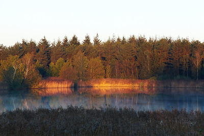 The first sunlight in nature reserve 'De Maay'. The light was great with some fog over the water.