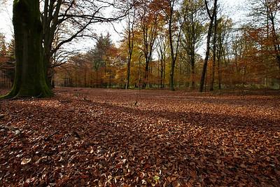 Long autumn shadows