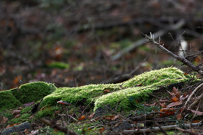 Moss in morning light