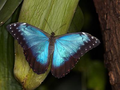 2012-02 Vlinderkas Leidschendam