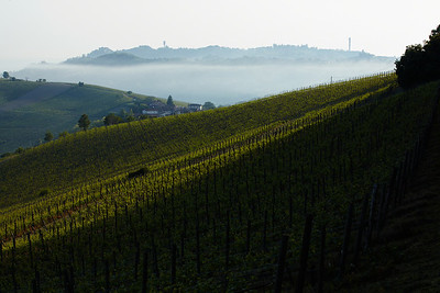 Vignards near Cogognola