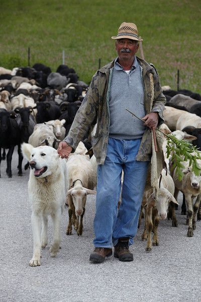 The shepherd Santino with his heard of sheep near the village of Campi