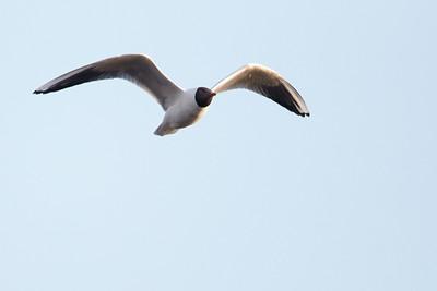 2014-04 Birds in De Kampina