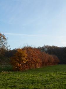 2014-11 Autumn