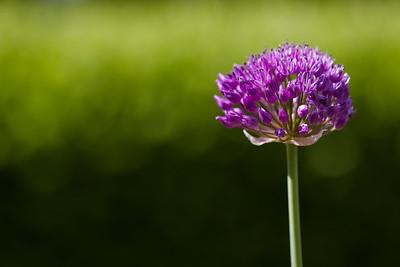 2015-05 Flowers in the garden