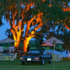 The Oak Trees in the Lowcounty are a true art form.  We enjoy washing them with amber light so to be enjoyed throughout the length of the event.   The Mercedes is not bad either