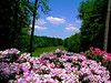 Springtime on the 18th Hole at Woodlawn Golf Course at Ramstein AB, Germany