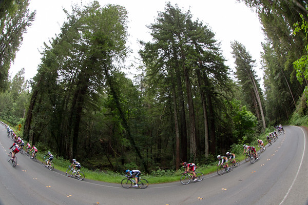 The peloton strings out past redwoods as it descends after the second KOM of the day.