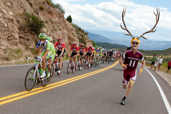 There are many antlered animals in Colorado, this one is not a native of the state.