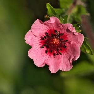De notre jardin