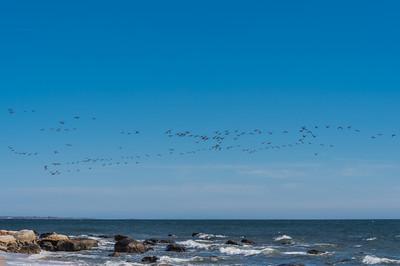Skyful of Birds