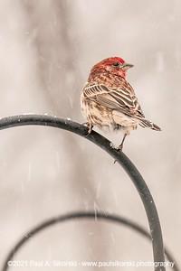 Bird In a Blizzard