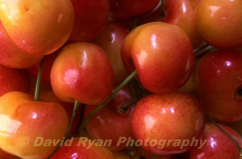 Queen Anne Cherries