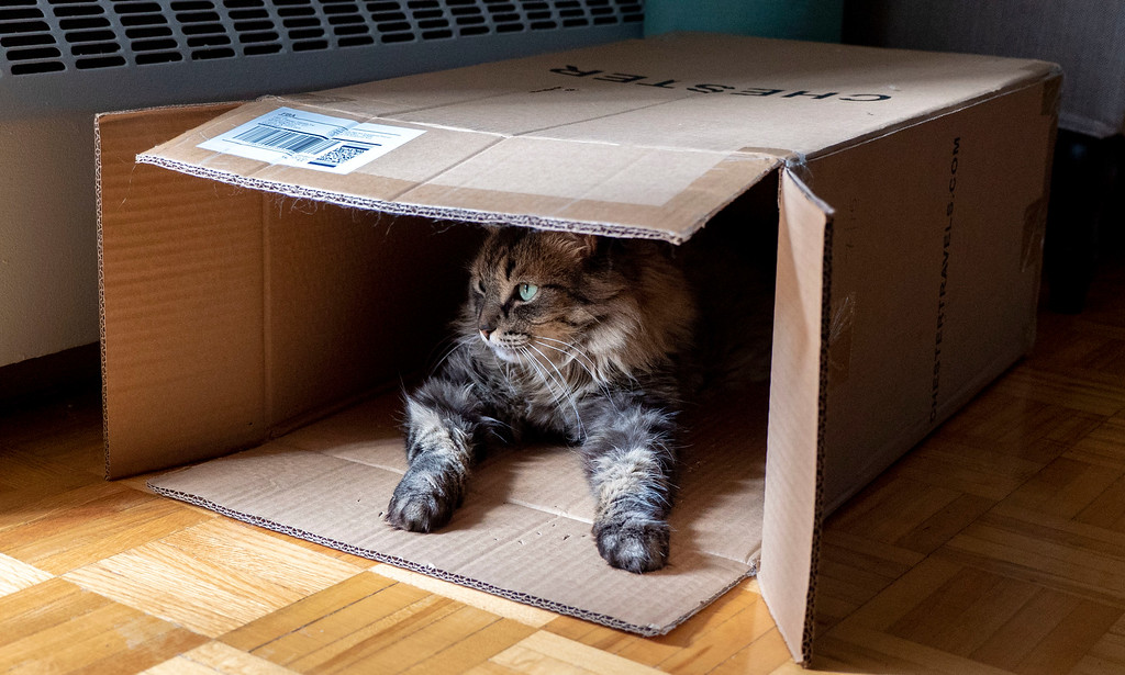 Chester Luggage - Cardboard box for cats to play in