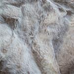 Biege-Frost-Sochi-Sable