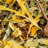 Natural-Cold-Therapy-Natures-Apothecary-Tea-8886-2