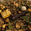 Yoga-Blend-Natures-Apothecary-Tea-8906-2