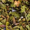 Lavender-Mint-Natures-Apothecary-Tea-8889-2