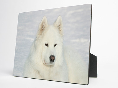 Brilliant color reproduction on hardwood panels.<br /> <br /> Sides and back are black with easel back.<br /> <br /> Highly resistant to ultraviolet rays, scuffs, scratches, water and fading.<br /> <br /> Your photo must be at least this big:<br /> 5 x 7:     575 x 805 pixels<br /> 8 x 10:   800 x 1000 pixels