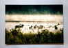 "12""x18"" Elk in the Mist Metal Print on the wall"