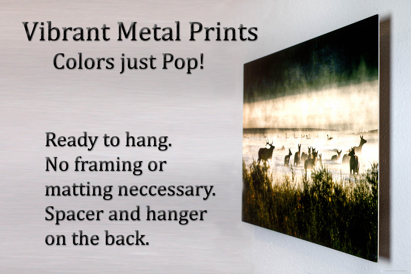 Vibrant Metal print Example on the wall. Comes ready to hang. No framing or matting needed.