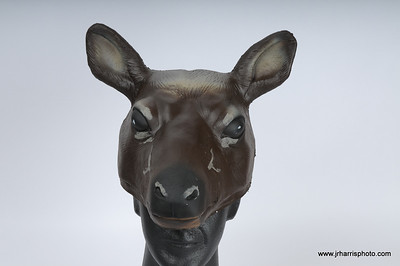 Prototype Cow Elk