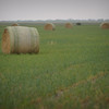 Rolled hay bales ready for sale in Anson, Texas.