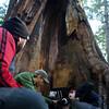 Redwoods_122211_Kondrath_0215