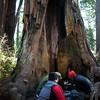 Redwoods_122211_Kondrath_0213