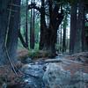 Redwoods_122111_Kondrath_0091