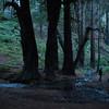 Redwoods_122111_Kondrath_0084