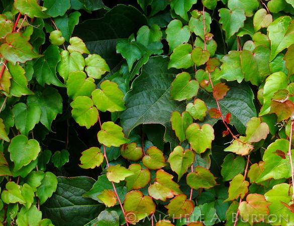# B - Fall Vines
