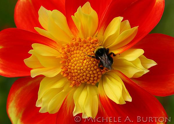 # B - Bee