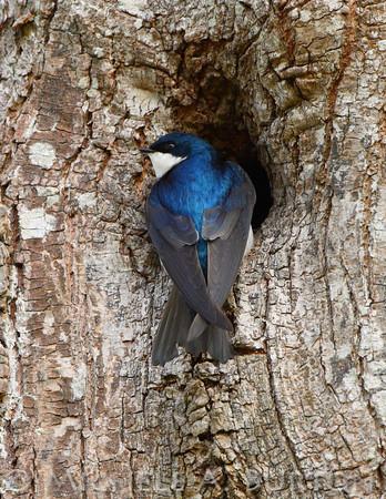 # W - Tree