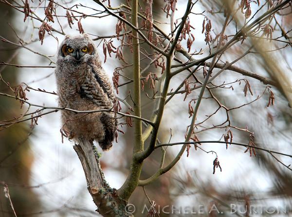 # W - Owl