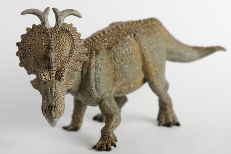 A toy pachyrhinosaurus, by Papo