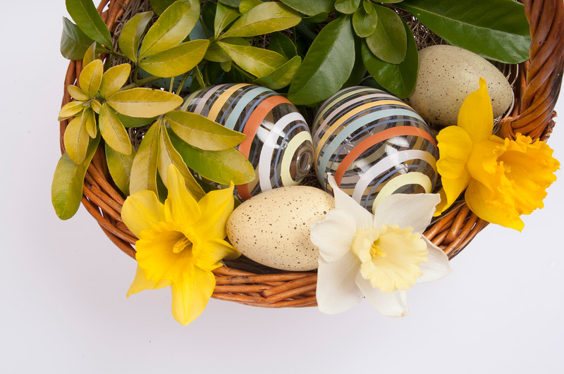 Easter basket with daffodils, and Easter eggs, isolated on white background